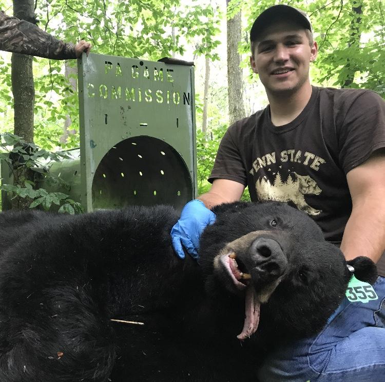 Sean bear