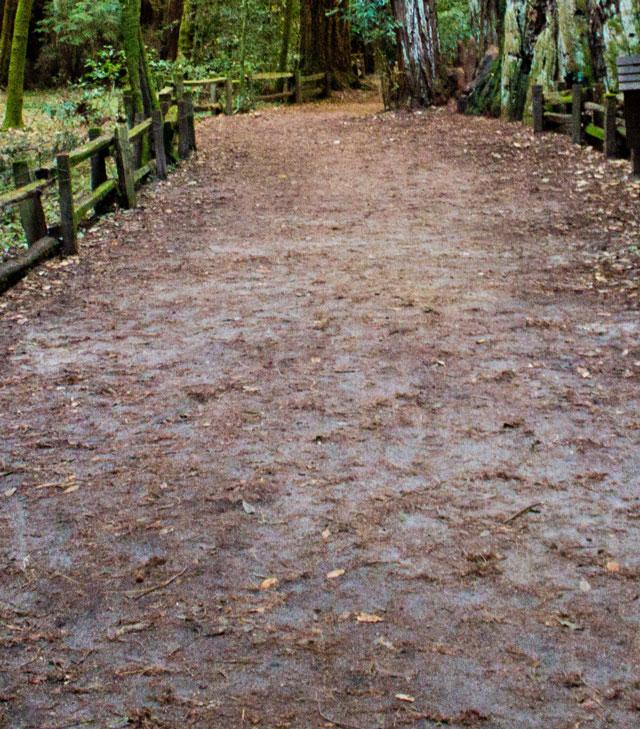 muddy trail