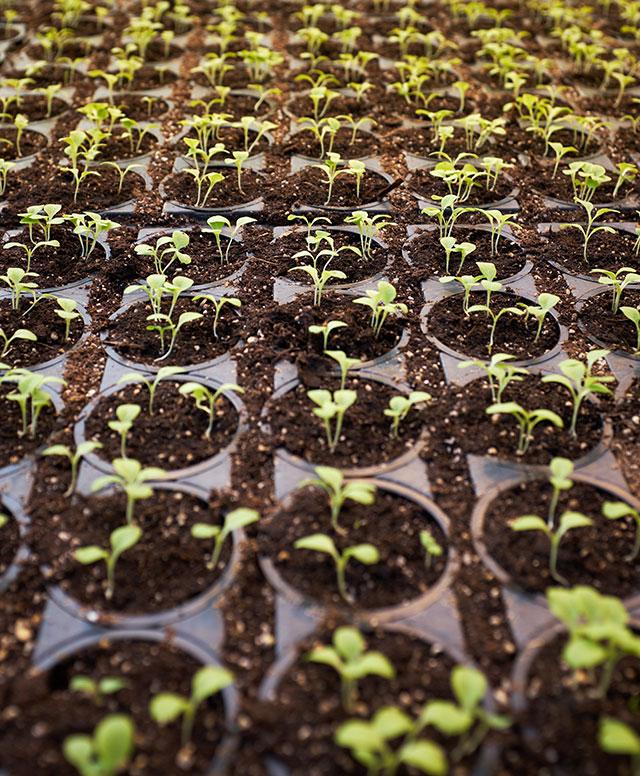 soil plants